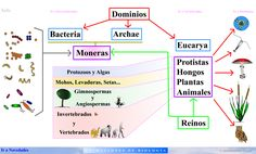 Html, Map, Study Tips, Vertebrates, You Are Mine, Insects, University, Science, School