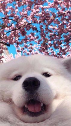 dog wallpaper for walls ; Cute Little Animals, Cute Funny Animals, Funny Dogs, Cute Cats, Cute Baby Dogs, Cute Puppies, Cute Puppy Wallpaper, Dog Wallpaper Iphone, Puppies Wallpaper
