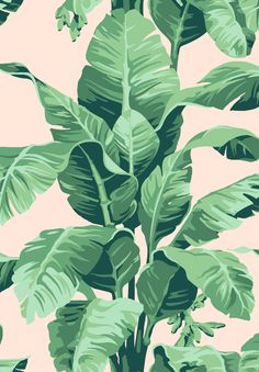 Pacifico Palm by Nathan Turner - Peach by Wallshoppe