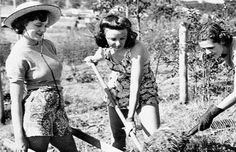 """""""Digging for Victory"""", Australian women maintain a victory garden 1941"""