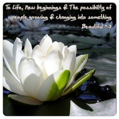 The Meaning To Lotus Life New Beginnings Possibility Of People Flowerswhite