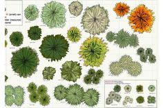 vectorworks plant symbols  - Isymbol.eu