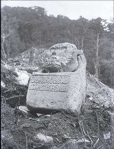 Close view of the Death's Head Monument with two lines of inscription on the front and one on the left side; near the Temple of the Foliated Cross. Palenque, Mexico. Photographed by Dr Alfred Percival Maudslay in 1890-1891. The ruins of Palenque are situated in the Mexican State of Chiapas. They stand on a narrow shelf on the northern slope of the foothills of the Sierra de las Naranjas. -British Museum-