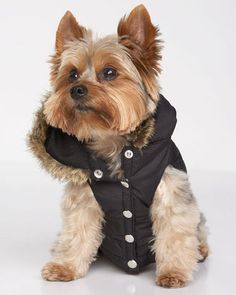 ShopStyle: Juicy Couture Dog Puffer Vest