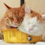 Sweet friends