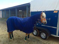 Pferdetransport - Tipps Perfect Fit, Horses, Animals, Tips, Animais, Animales, Animaux, Animal, Horse
