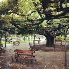 Enjoying some fresh air under the trees of Jardim do Principe Real Princesa Real, Big Tree, Hot Days, Four Seasons, Fountain, The Neighbourhood, Explore, Photo And Video, Park