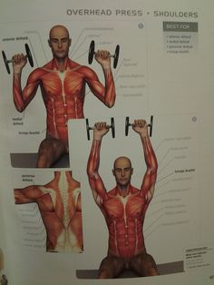 SHOULDERS: overhead press (ant/medial/post deltoid, triceps brachii) ? reps