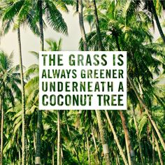 A little quote from one of our favourite blogs: Goldfish Kiss. The grass is always greener underneath a coconut tree. Travel. Beach life