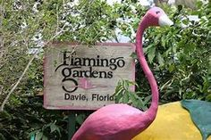 Image result for Florida flamingo Attractions