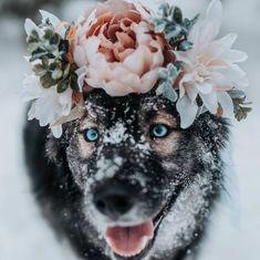 Hund - Hund welpen - Rottweiler h Pretty Animals, Cute Funny Animals, Cute Baby Animals, Animals And Pets, Cute Puppies, Cute Dogs, Dogs And Puppies, Doggies, Beautiful Dogs