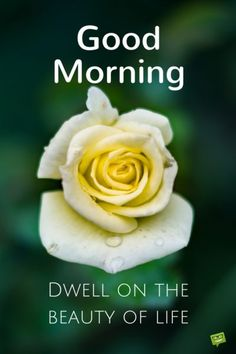 Good Morning. Dwell on the beauty of life.