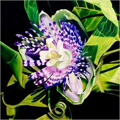 """Image of """"Passion Flower"""" Giclee"""