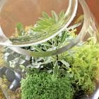 Plant a Beautiful Terrarium | Midwest Living