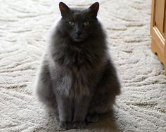 Fluff (our cat)