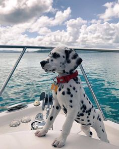 Good Pic dogs and puppies happy Thoughts Carry out you like the dog? Appropriate doggy care as well as training will assu Cute Baby Dogs, Cute Dogs And Puppies, Doggies, Dalmatian Puppies, Puppies Puppies, Doggie Beds, Cutest Dogs, Pomeranian Puppy, Big Dogs