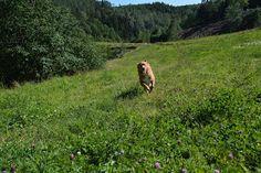 Gårdstunet Hundepensjonat: Enda en nydelig dag på tunet