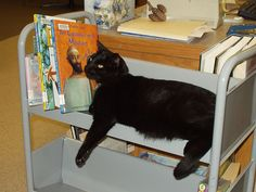 Browser, Pine River Public Library's cat, waiting to be shelved.