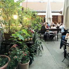 1000things.at hat euch eine Übersicht über versteckte Gastgärten in Wien zusammengestellt, in denen garantiert Urlaubsfeeling aufkommt. Restaurant Bar, Vienna, Restaurants, Plants, Vacation Places, Alone, Waiting, Croatia, Pictures