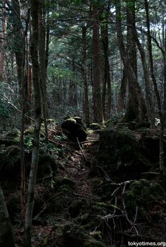 Aokigahara Fuji Japan-suicide forest. Aokigahara means Sea of trees in Japanese and is second to The Golden Gate Bridge as the most popular place for suicides. There is no wind in the forest due to the geography or birds. Compasses don't work in the forest.