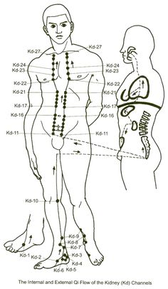 The Kidney Meridian – Harmonizing Fluids and the Autonomic Nervous System Cupping Therapy, Massage Therapy, Craniosacral Therapy, Acupuncture Points, Acupressure Points, Qigong, Autonomic Nervous System, Reflexology Massage, Health Heal