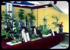 Exhibition of arranged flowers  Enami Studio Lantern Slide No : 378.  About 1920's, japan