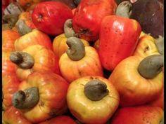 Cashew Fruit കശുമാങ്ങയുടെ ആരോഗ്യ ഗുണങ്ങൾ നിങ്ങൾക്കറിയാമോ