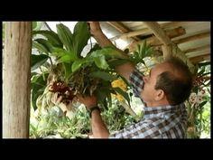 FIEBRE DE ORQUÍDEAS - EDICIÓN ESPECIAL CANAL TRO - YouTube