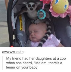 "Just all casual... ""Excuse me ma'am, but there is a lemur on your baby."""