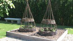 Image result for opora pro popinave rostliny