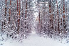 Beautiful winter scene in the forest covered by snow. Christmas Time, Christmas Cards, Beautiful Winter Scenes, Art Prints For Home, Time Art, Wood Print, Fine Art Photography, Fine Art America, Rainbow