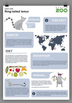Zoo Infographic signage by Dylan Mackay, via Behance