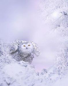 Winter Beauty | Photograph by ©Jasna Matz #WildlifePlanet