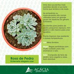 Echeveria, Plantas Bonsai, Plants Are Friends, Replant, Little Plants, Cactus Y Suculentas, Plant Species, Succulent Terrarium, My Secret Garden