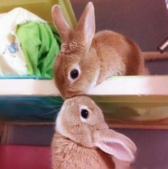 Cute Hunny Bunny Kiss - You are viewing Photo titled Cute Hunny Bunny Kiss – Incredibly Cute Cuddly Furry Rabbits Kissing. from the Category Amazing Pictures Tags: Animals Kissing Perfect Clicks Cute Animals Kissing, Cute Baby Animals, Animals And Pets, Funny Animals, Kids Animals, Baby Bunnies, Cute Bunny, Bunny Rabbits, Cutest Bunnies