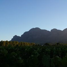 """End of the day. #paarl #westerncape #southafrica #wineregion #winelands"""