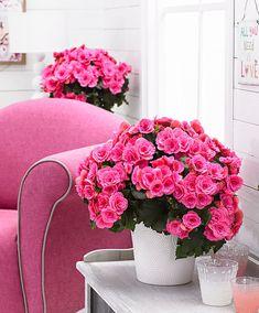 Delicious Corsetto Nero A Fiori Violettes Corsets & Bustiers Clothing, Shoes & Accessories