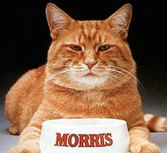 "Morris, the world's most finicky cat, was also called ""the Clark Gable of Cats"" and in 1983, Time Magazine declared Morris ""The Feline Burt Reynolds""."