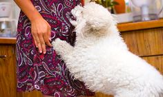 Canine Minded: How To Stop Your Dog From Jumping On People