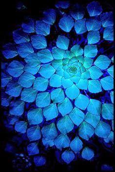 Mentaal Spa Lidice-Ba: Azul mágico