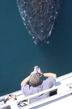 Curious humpback whale in the Bay of Fundy