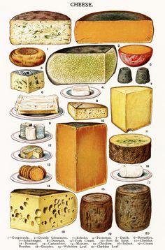Cheese - Gorgonzola, Dutch, Cheddar, Camembert, Cheshire, Stilton, etc