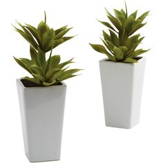 Nearly Natural Double Mini Agave w/Planter (Set of 2) ($55) ❤ liked on Polyvore featuring home, home decor, floral decor, plants, fillers, flowers, plant filler, nearly natural, flower planters and flower stems