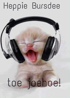 Kitty Beats - Is this Boo Boo Kitty (for all the Empire Fans? techno kitty, gangster rap kitty, hip hop kitty or Rock kitty? Kitty Dee Jay Music Animated baby Kittens ❤༻ಌOphelia Ryan ಌ༺❤ Cute Funny Animals, Cute Baby Animals, Funny Cute, Animals And Pets, Funniest Animals, Hilarious, Cute Kittens, Cats And Kittens, Kittens Meowing