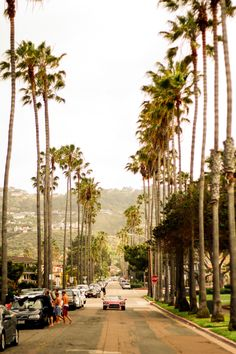 La Jolla, California. Why do palm trees look so beautiful in California!