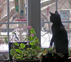 From the Archives:  A Snowy Day in 2007