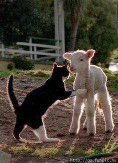vem cá, me da um abraço!!!