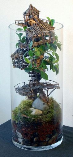 Tree Top Terrarium