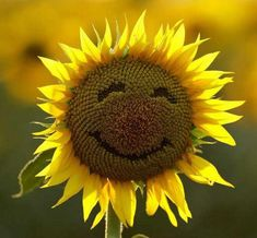 How to cultivate a better you. Martin E. Seligman, professor of psychology at the University of Pennsylvania, suggests how to cultivate a better you. Sunflower Quotes, Sunflower Pictures, Sunflower Art, Sunflower Patch, Happy Flowers, Beautiful Flowers, Sunflowers And Daisies, Growing Sunflowers, Wildflowers