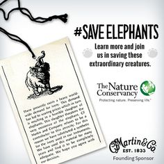 Did you know that the elephant population has decreased by over two-thirds since 1980. #SaveElephants